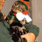 #厉害了我的猫##宠物# 我的猫 也许不懂得讨好 乖乖等你的拥抱 你的肩膀是它的骄傲……