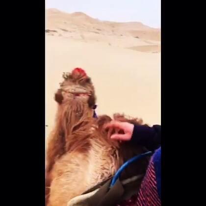 l#完美旅行·大漠传奇##随手美拍# 一本书 爱上了一个地方 喜欢三毛。喜欢荷西