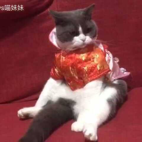 【汪哥哥vs喵妹妹美拍】#厉害了我的猫#🌚边扫着尾巴帮忙...