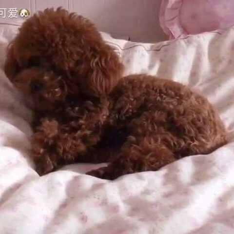 睡觉啵#宠物# - 萌宠视频 - 奶茶小可爱的美拍