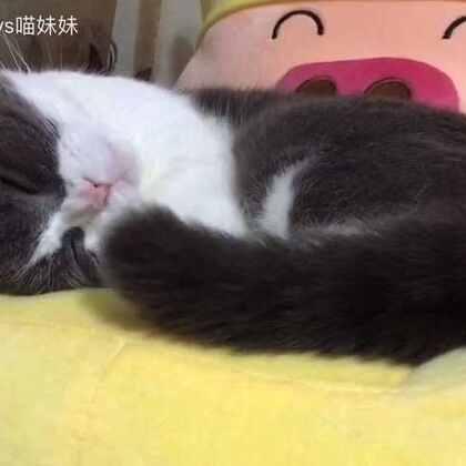 我的猫自己哄自己睡觉😊#宠物##尾巴摇起来#