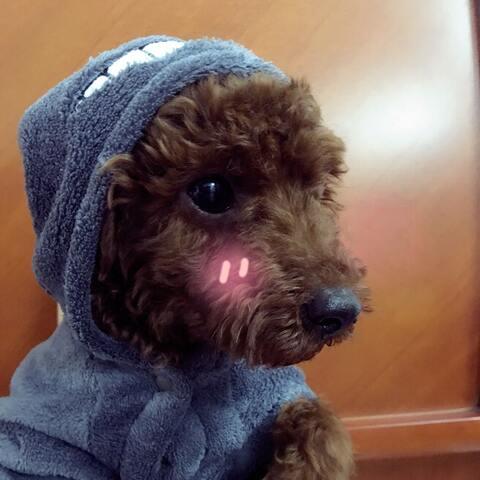 【a小样儿美拍表情文】我家小可爱#可爱的狗宝宝
