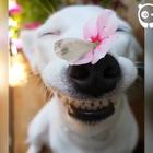 国外很火的微笑狗合集!是不是很萌![:爱心#宠物#]