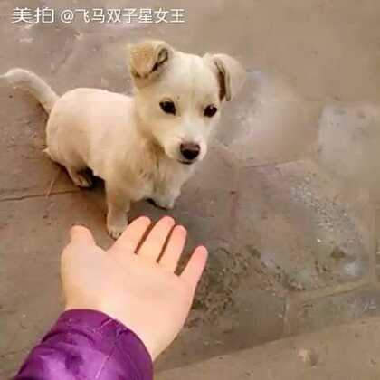 【飞马双子星女王美拍】01-19 14:36