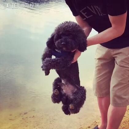还没下水就开始游泳的狗~😂😂😂#别人家的狗都好可爱#