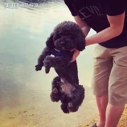 还没下水就开始游泳的狗~#别人家的狗好可爱#😂😂😂