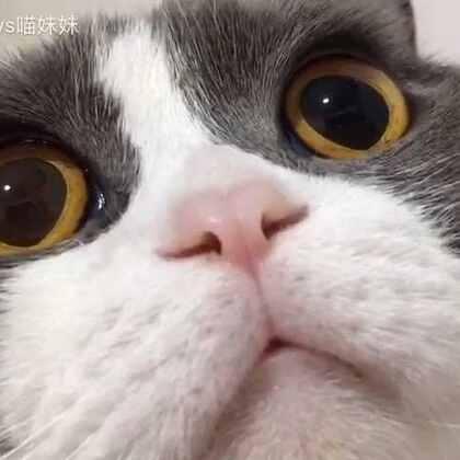 #萌宠美瞳秀#萌妹子的大眼睛👀#宠物##过年穿这样#