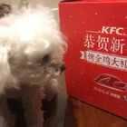 肯德基烤全鸡大礼包~小时候总说我想吃一只肯德基,长大终于实现了!#吃秀##美食##锅儿姐就不嚼##肯德基#