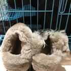 再见了我的鞋,好气哦,可是生气的样子好丑我还是要保持围笑~ 请问狗肉怎么做好吃?#热门#