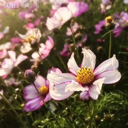 厦门五通灯塔的那些花儿…我也不知道是什么花,你们知道吗?#随手美拍##宅的无聊日常#最近得了懒癌,不想拍视频,等有心情了再继续分享,如果你们还在还想看……