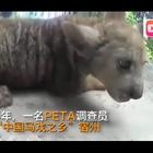 看的好难过,揭示马戏团训练动物过程,简直触目惊心💔💔#热门##虐待动物#