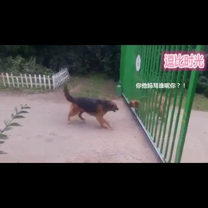 #搞笑##逗比时光#在一扇铁门两侧,两伙聚众斗殴的狗子,骂骂咧咧随时要爆发流血冲突。结果,中立的门巧妙地化解了这场争斗