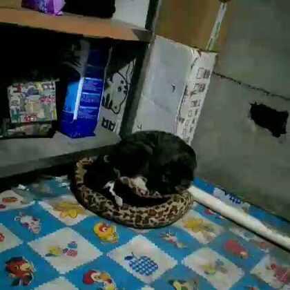 坏猫咪!!!#随手美拍#
