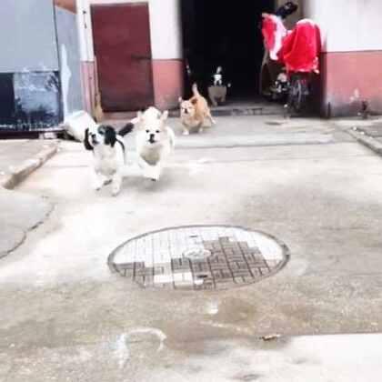 注意注意⚠️:一群胖子向你跑来……砸的地面振三振😹胖子们的放风时间到了……后面有玩雪的视频……最后面出场的是点点今天14岁了……点点生日快乐……@美拍小助手 @丸子轮—它爸 #随手美拍##宠物狗狗#