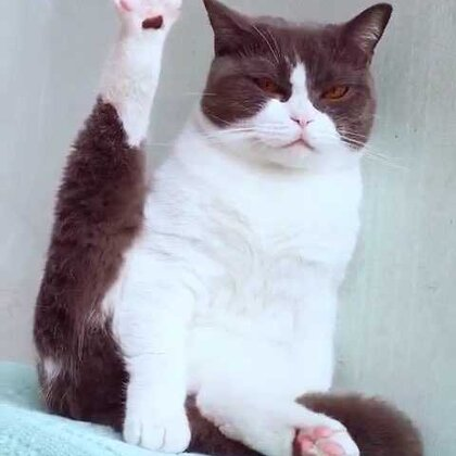来来来,小板凳快坐好😏铲屎婆带你看猫片,妹子大尺度出镜表演🌚#宠物##喵老板#