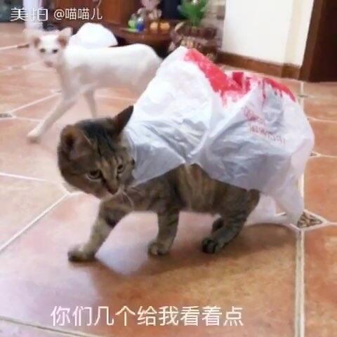 【喵喵儿美拍】当宠物会说话 当主人不在家 喵麻...