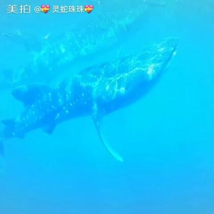 浮潜看鲸鲨。
