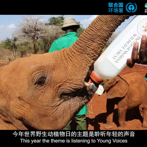 【联合国美拍】保护濒危野生动植物,它们才是地...