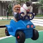 别说了,快上车😏喵妹司机要开车了🌚#宠物##坐车车#
