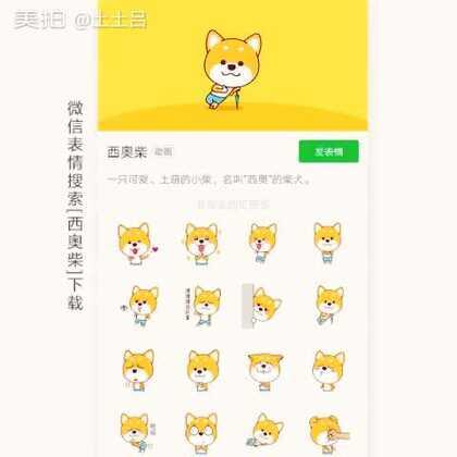 """小柴犬表情""""西奥""""微信表情已上线,微信表情内搜索""""西奥柴""""下载 ฅ( •ั็ω•็ั ) ฅ"""