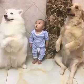 童年养狗的乐趣。#萌宠##美拍小助手#