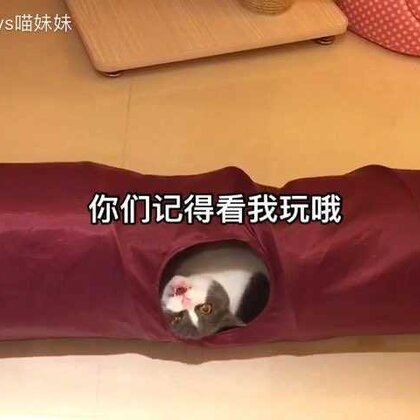 🐱喵星人玩个隧道可以玩出千姿百态😘怎么爱你都不嫌多😬话说,黑哥,史上最没存在感的布景😂#宠物##宠物独特叫声#