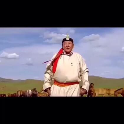 #蒙古##蒙古马#❤️