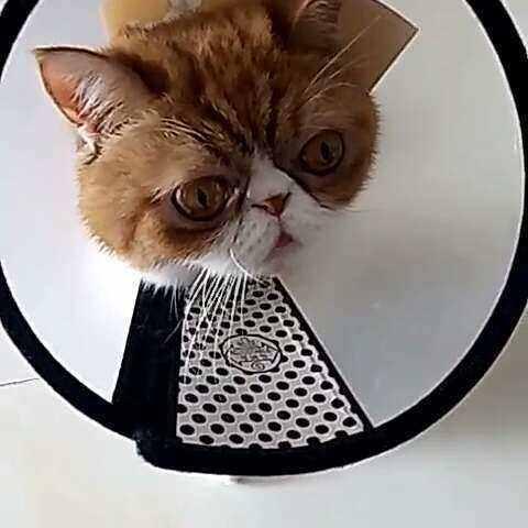 #加菲猫##视频##可爱#大眼萌-萌宠宠物-六六视频教学基本笔画毛笔图片