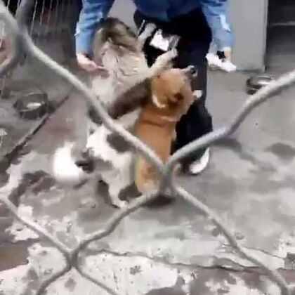 #宠物#济南黄河流浪狗救助中心的狗狗们都很热情,都等着被领养到一个温暖的家里,所以只要有人来,它们都会积极的表现,亲你蹭你粘着你,就是希望你能把它抱走。