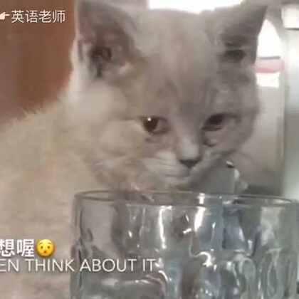 没想到你是这样乖的猫……
