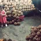 小蛮在印尼吃榴莲。#可爱吃货小萌妞##吃货小蛮#