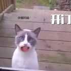 萌猫惨遭主人抛弃在门外,它一开口我就跪了!#跟风猫##搞笑##喵星人#