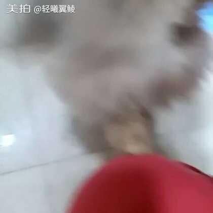 不然无聊,得给它拍个视频。😊#宠物兔兔那么可爱!#