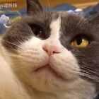 #来晒小萌爪#床是喵的 不准碰 好玩的猫🐱爪子送你们~~#宠物##喵妹爱呲牙#