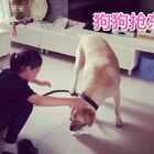揭秘莹#宝宝#最爱的#宠物#狗狗就是它,它叫多多!多多每次碰见莹莹都要突击亲一下莹莹,每次我都没反应过来,抓拍不到,太快了!这次多多来我家玩,我就静静的看着你们玩!
