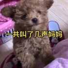 可爱的呢#宠物##狗狗#