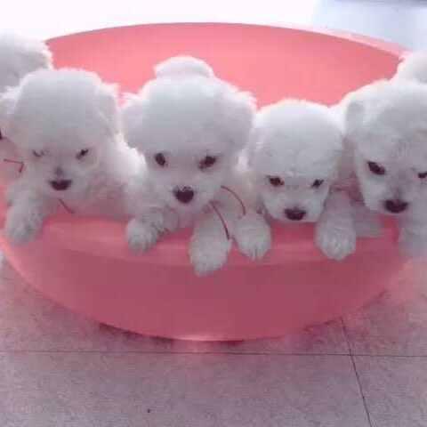 #宠物#送走一只 还剩下八只小可爱 - 萌宠视频