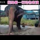拒看一切动物表演😭大家转发一下,爱护动物,人人有责🙏#精美电影##宠物#微博https://weibo.com/u/1774219223(视频来自:视频之家)