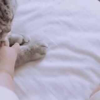 比比谁的爪子可爱😂#宠物##宝宝#