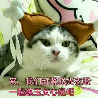 爆笑猫咪版杨过与小龙女😂包子龙女VS清秀美男杨过诺伊😂#宠物##搞笑##美拍捕猫大赛#
