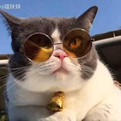 #五一去哪儿#来#碧桂园十里银滩#和喵妹偶遇吧😉#宠物#