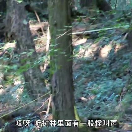 【探险日本:禁地深处】在青木原树海深处,雷探长循着死者留下的绳子,寻找自杀的真相。松软的土地、四处隐藏着陷阱,不经意间,雷探长发现自杀的踪迹。#冒险雷探长#