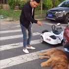 碰瓷胎#宠物##搞笑#