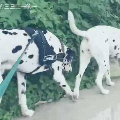 日常遛狗~#宠物#💌