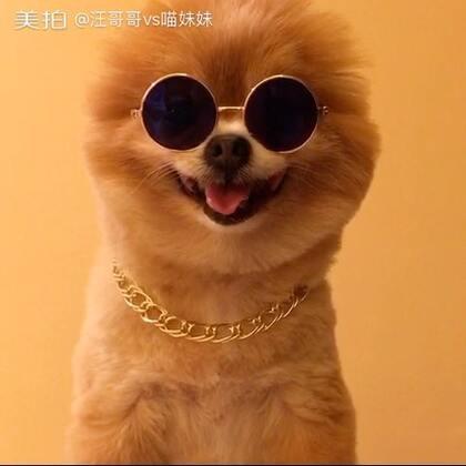 妹子约吗😏跟着我,将来咱的娃就是富二代😎#宠物##坚强的仔仔##给宠物戴眼镜#