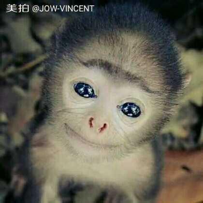如果我变成猴子_______就在今天 RMB #Arena2017全球齐舞大赛# 期待