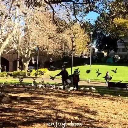 澳大利亚人与动物共同享受着那片宁静#旅行##澳大利亚#http://m.weibo.cn/1686230883/4102639546907817