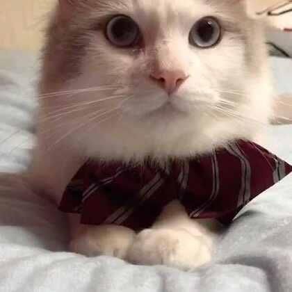 #宠物#有没有帅到你?☺☺☺你们给劲的夸吧,我受得住🙈😂