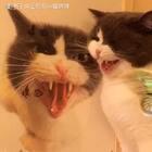 🙈哪个是我😍哪个更可爱#宠物##逗比喵星人#