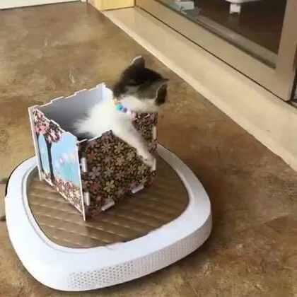 #宠物#开着小车车去旅行,滴滴巴巴……让开!(救助的小流浪猫,已经有人领养了,被这个视频萌到了,一定分享来美拍)